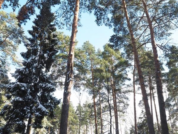 Предлагается роскошный лесной участок площадью 60соток водном изсамых престижных коттеджных поселков «Сосновый Бор (Николина Гора)» стремя строениями общей площадью 2350 квадратных метров.